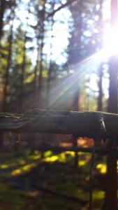 Wandern im Schwarzwald Foto Wanderung
